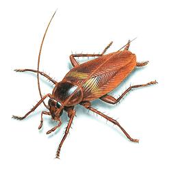 Избавиться от тараканов в Тюмени
