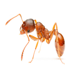 Вывести муравьев в Тюмени